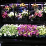 LED PROMOLUX aumentan las ventas por impulso