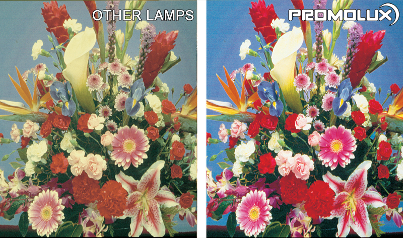 Supermarket Lighting - Promolux LED lights versus regular lighting . Floral Display Case Lighting. Flowers, floral, bouquet lighting from Promolux