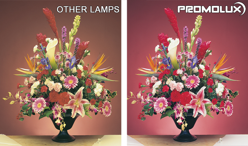 See the different Promolux LED Lighting makes in your floral retail display cases. Roses and lilies pop with our quality lighting.