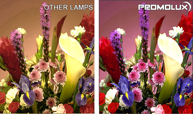 Supermarket Floral Display Case Lighting - see the difference between regular lighting and Promolux LED lighting for floral display cases