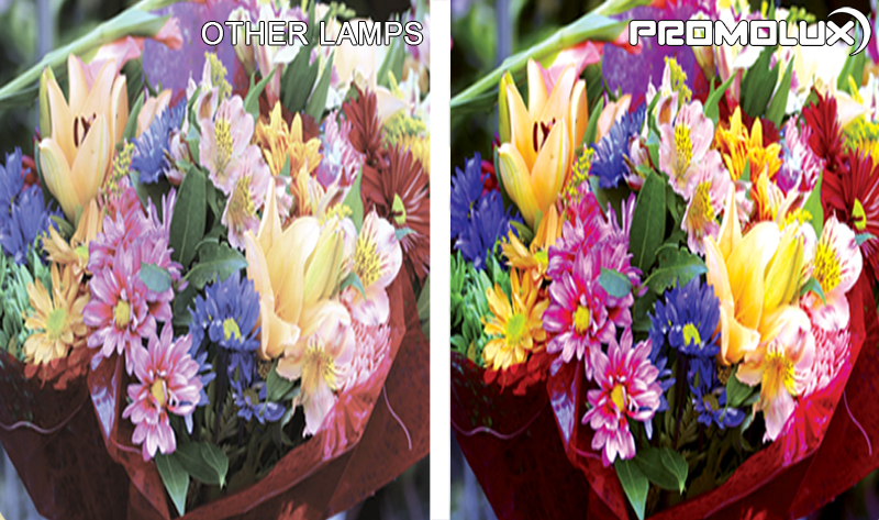 Compare Promolux LED Lighting with regular lights and the difference in your flower shop display lighting. Simply the best with Promolux.