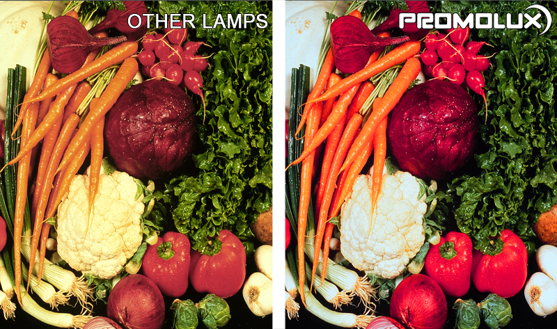 Vegetable Display Case Lighting - Compare vegetables such as carrots, califlower, peppers, onions and lettuce, under Promolux LED lighting versus regular lighting. You can clearly see the difference with Promolux.