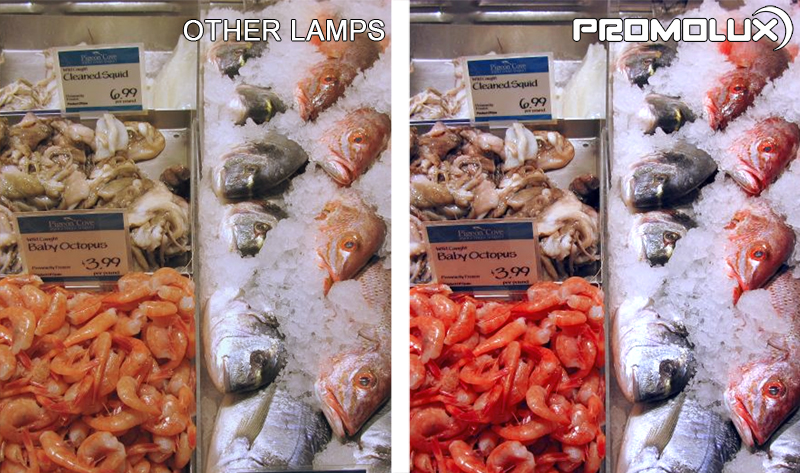 Seafood Display Case lighting - Shrimp, crab, salmon, all seafood looks better and stays fresh longer with Promolux LED lighting.