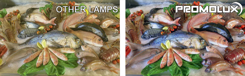 Supermarket Seafood Lighting - see the different Promolux LED Lighting makes in your seafood retail cases. Salmon, shellfish, cod, crabs pop with our quality lighting. See how Promolux can protect and enhance sales for your perishable seafood.